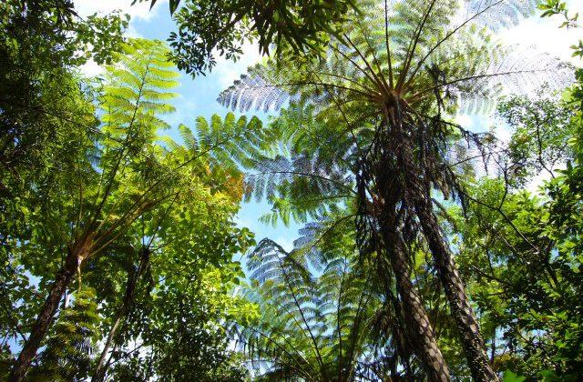 自然と人との関係において、すべての人が自分事に捉えることが大事なのだ。自然の存在を「自分事」にする第一歩を若い人に伝えている小林さんは「『代表』とは、代わりに表に立つ人」だと、教えてくれた。人が生きる上で大切なこと、沖縄にとって大切にすべきものを考え、伝えていくことの大切さを改めて知る機会となった。